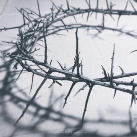 thorn-crowns-web