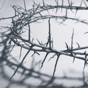 thorn-crowns-web