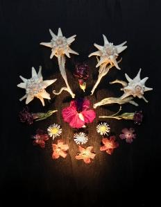 Edelweiß, Lichtnelke, Gänseblümchen, Violette Königskerze