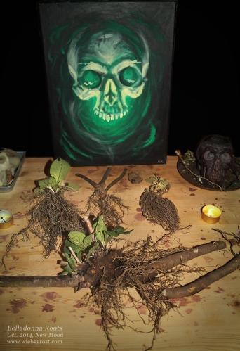 Deadly Nightshade Harvest