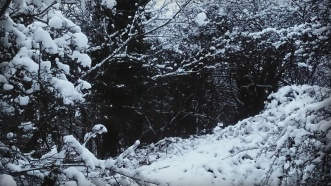 Winter darkness..
